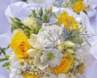 Yellow flowers - yellow roses - West Sussex