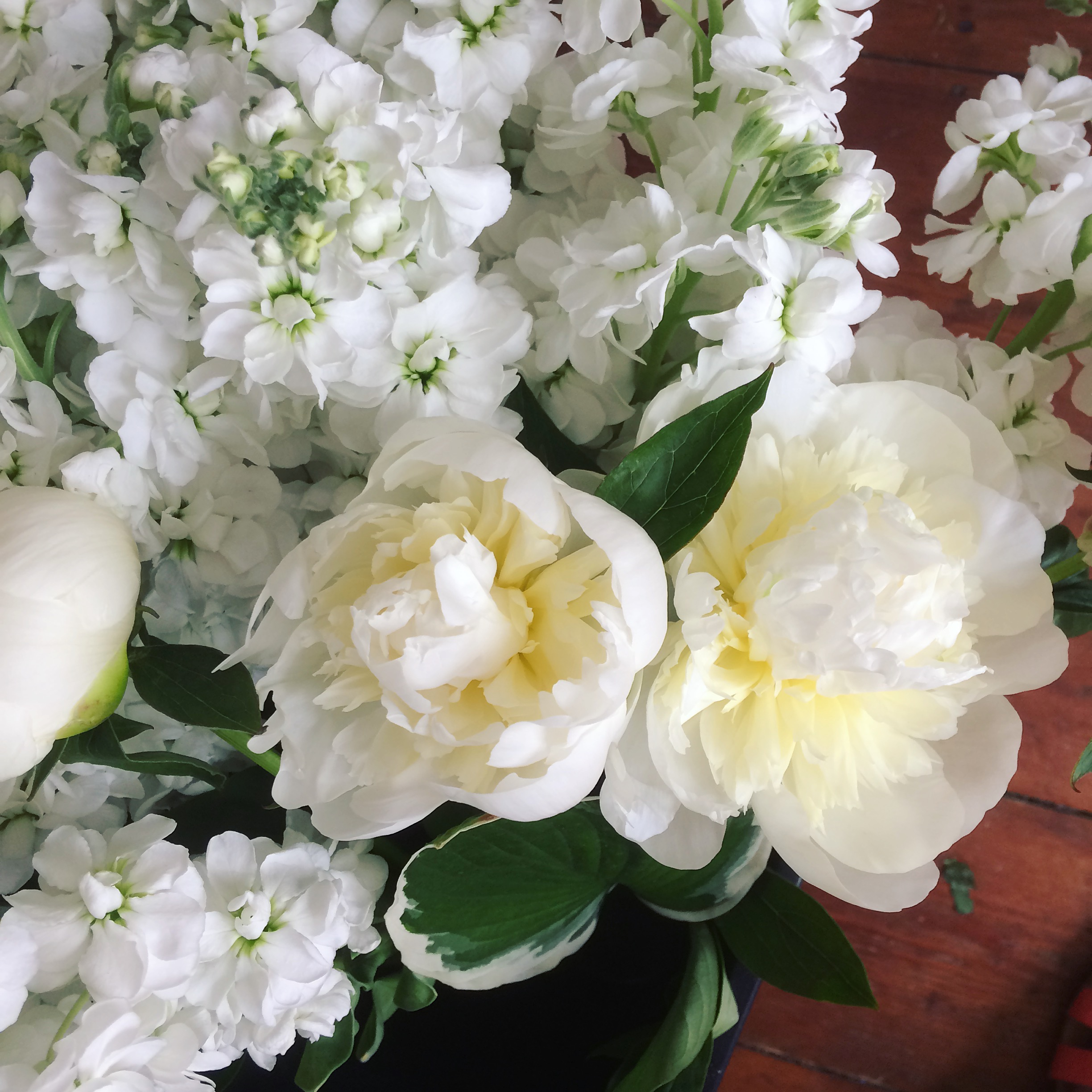 white peonies and stocks, perfect for wedding flowers in june