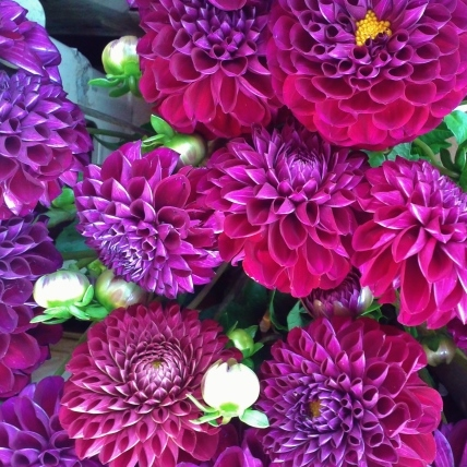 Dahlia, purple wedding flowers