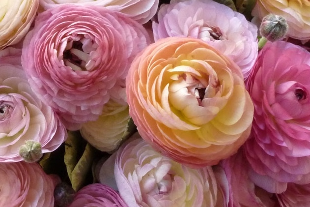 pink ranunculus instead of peonies