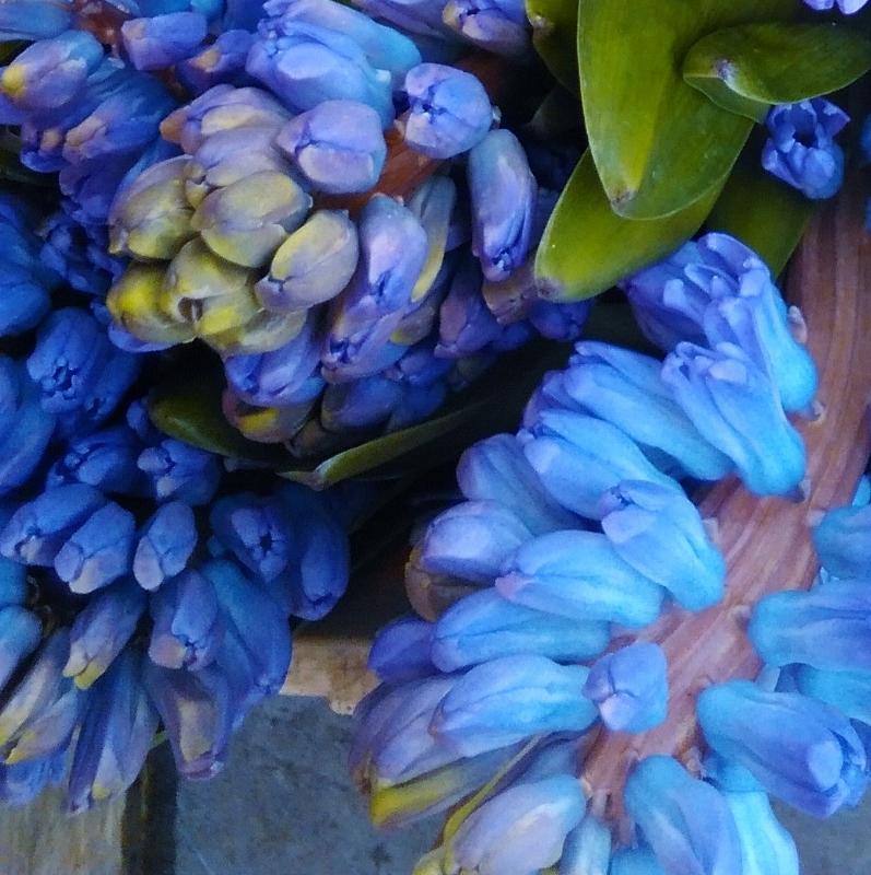 Blue hyacinth, Blue wedding flowers, blue wedding, blue wedding ideas, blue wedding inspiration