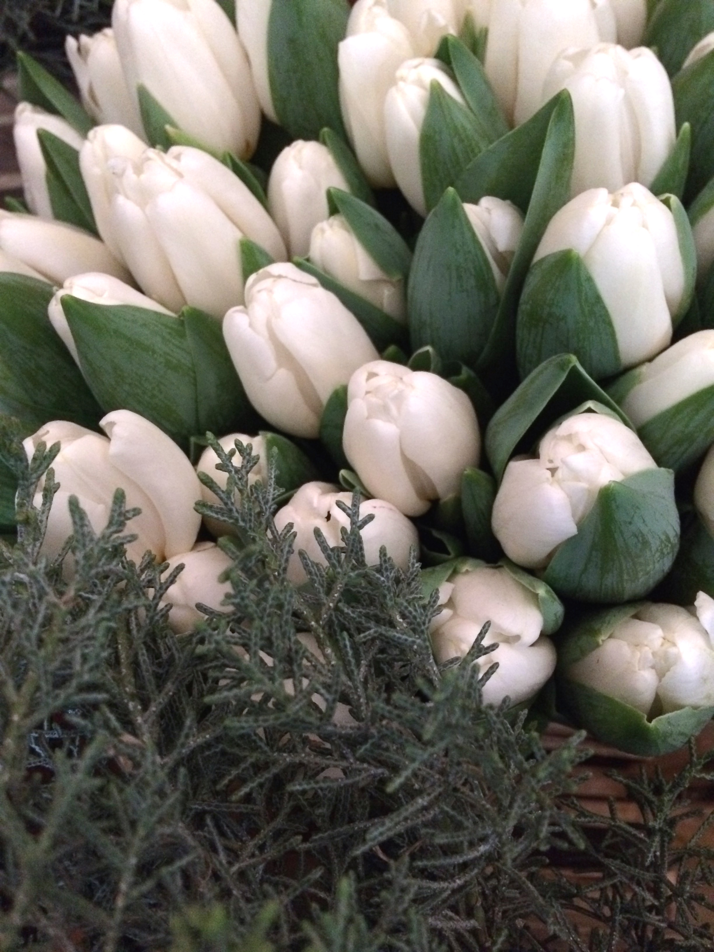 white tulips for a winter wedding in worthing