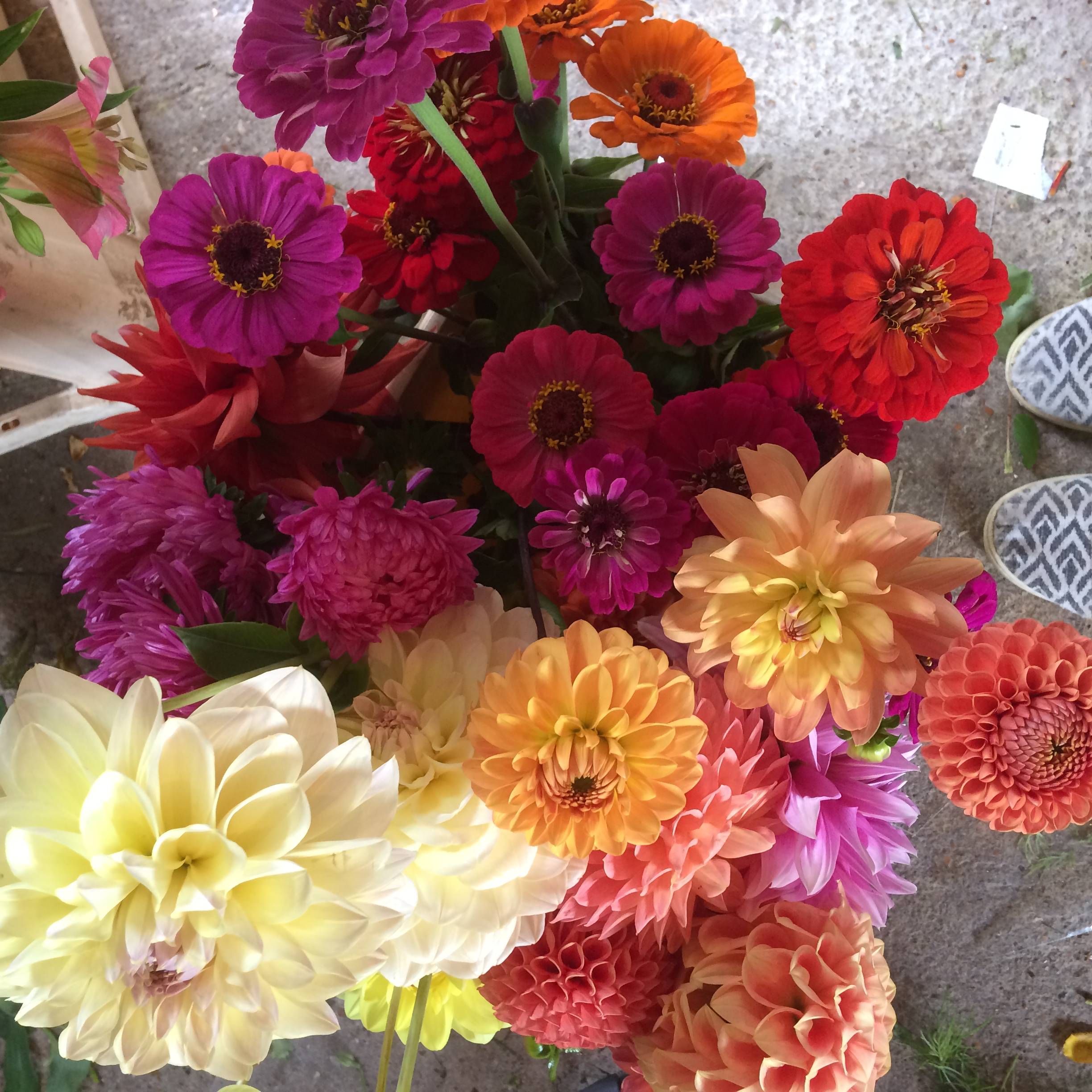 dahlia and zinnia september wedding flowers sussex