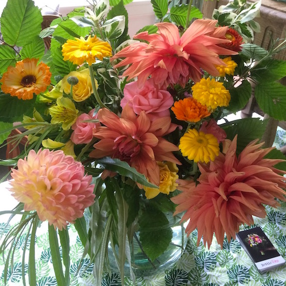 september dahlias