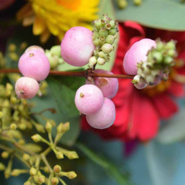 September wedding flowers inspiration bettie rose brighton pretty berries available in both pink and white i love them for adding interesting texture and shape to an arrangement mightylinksfo