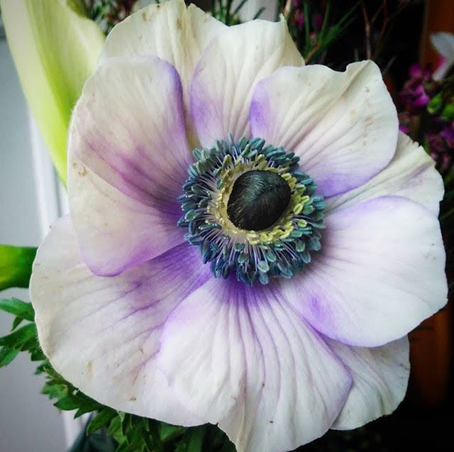 anemone spring wedding flowers