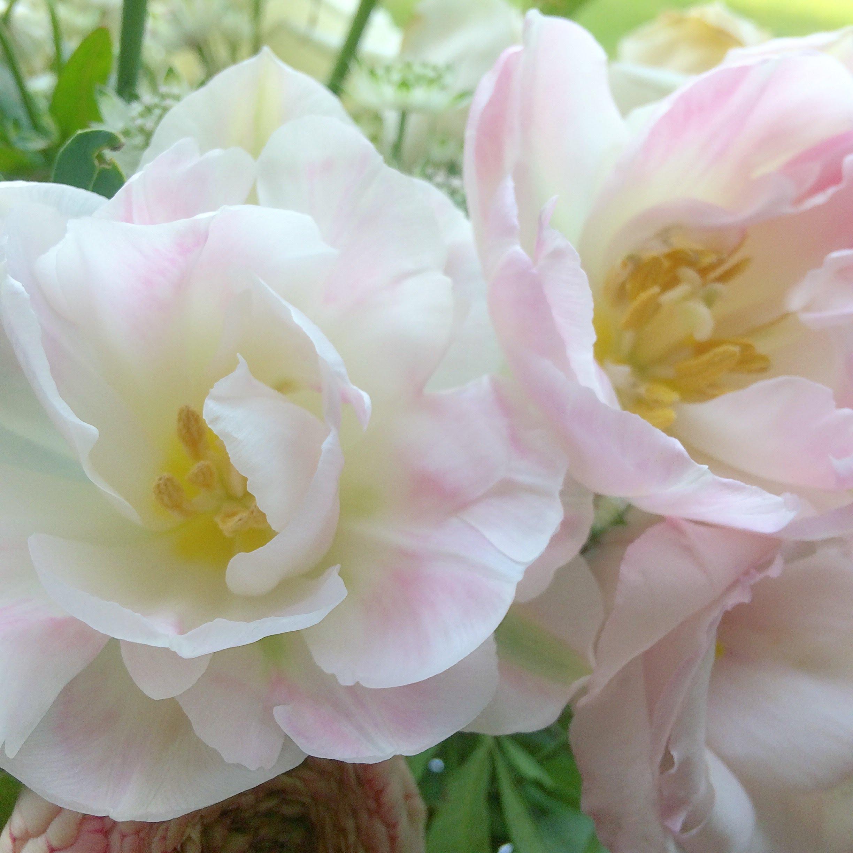 angelique tulips my top 10 spring wedding flowers